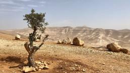 Occupazione dei territori palestinesi nel diritto internazionale